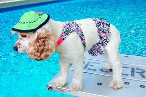 Bathing Suit for dogs