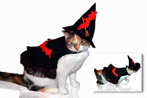 Dress and with hat costume for cats