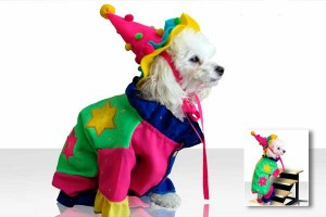 Clown costume for dogs