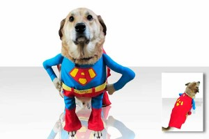 Super hero costume for dogs