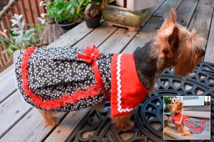 Sailor dress for dogs photo
