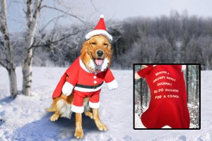 Santa costume for dogs