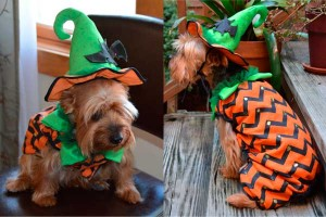Pumpkin costume for dogs photo
