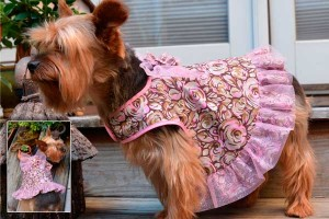 Summer dress for dogs