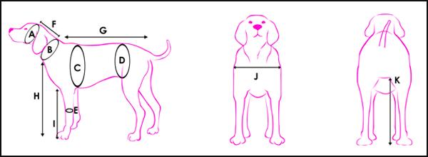 measurements_graphic-hz